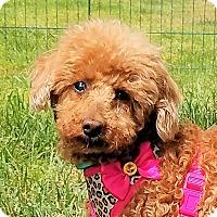 Adopt A Pet :: Blossom - Covina, CA