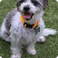 Adopt A Pet :: Coconut - Woonsocket, RI