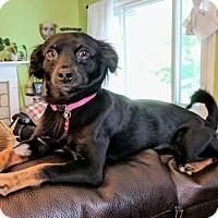 Adopt A Pet :: Fifi - Delaware, OH