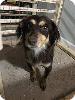 Dachshund/Mixed Breed (Small) Mix Dog for adoption in East haven, Connecticut - Chance