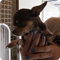 Adopt A Pet :: Angel - Rutledge, TN