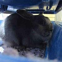Adopt A Pet :: KIMCHI - Santa Maria, CA