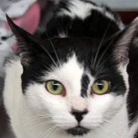 Adopt A Pet :: Ruckus - Sarasota, FL