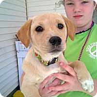 Adopt A Pet :: Bella - Danbury, CT
