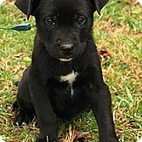 Adopt A Pet :: Keaton - Staunton, VA