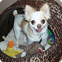 Adopt A Pet :: ZOE LONDON - AUSTIN, TX