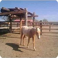 Adopt A Pet :: Deo - Pueblo, CO