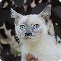 Adopt A Pet :: Meri - Santa Monica, CA