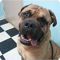 Adopt A Pet :: ANGUS - Phoenix, AZ
