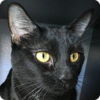 Adopt A Pet :: Elvira - Winchester, CA