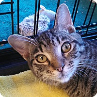Adopt A Pet :: Cypress - Scottsdale, AZ