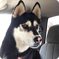 Adopt A Pet :: Tundra - Post, TX