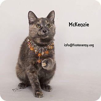 Domestic Shorthair Kitten for adoption in Riverside, California - McKenzie