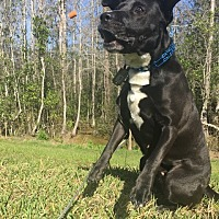 Adopt A Pet :: Kimmy - Oviedo, FL