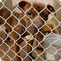 Adopt A Pet :: Rocco - ADOPTED! - Zanesville, OH