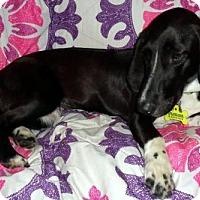 Adopt A Pet :: SASSY - Pennsville, NJ