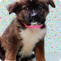 Adopt A Pet :: Miranda - Waldorf, MD