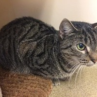 Adopt A Pet :: Patience - Pompano Beach, FL