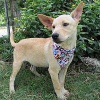 Adopt A Pet :: Kara - Tyler, TX