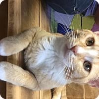 Adopt A Pet :: Sunkist - Tioga, PA