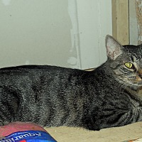 Adopt A Pet :: Kira - Palo Cedro, CA