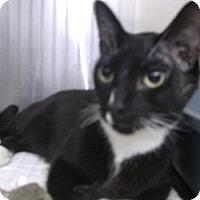 Adopt A Pet :: Willy (aka Nine) - Canoga Park, CA