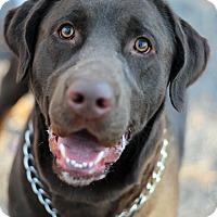 Adopt A Pet :: Jake - Tinton Falls, NJ