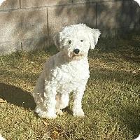 Adopt A Pet :: MJ - Tucson, AZ