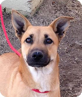 Shepherd (Unknown Type) Mix Dog for adoption in kennebunkport, Maine - Cara - foster needed