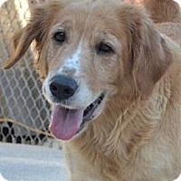 Adopt A Pet :: Sandy - Foster, RI