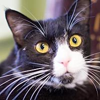 Adopt A Pet :: Flop - Auburn, CA