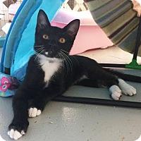 Adopt A Pet :: Kendra - N. Billerica, MA