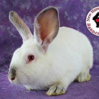 Adopt A Pet :: Broccoli - Wilmington, NC