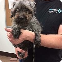 Adopt A Pet :: Mister - Millersville, MD