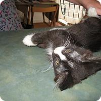 Adopt A Pet :: Cutie - Fallon, NV