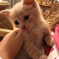 Adopt A Pet :: Dusty - Mims, FL