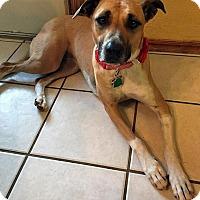 Adopt A Pet :: Tessa - Oklahoma City, OK