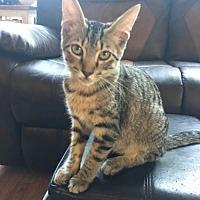 Adopt A Pet :: Widget - ROSENBERG, TX