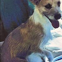 Adopt A Pet :: Marge - Santa Rosa, CA