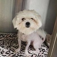 Adopt A Pet :: Casper - Palm Beach, FL