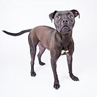 Adopt A Pet :: Ivy - Decatur, GA