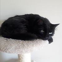 Adopt A Pet :: Willow - Hollywood, FL