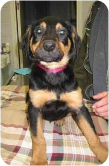 Shepherd (Unknown Type) Mix Dog for adoption in Florence, Indiana - Laverne