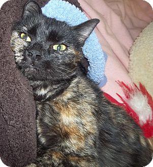 Domestic Shorthair Cat for adoption in Duluth, Minnesota - Purreka!