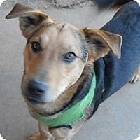 Adopt A Pet :: Tracker - dewey, AZ
