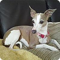 Adopt A Pet :: Asia - LA - Costa Mesa, CA