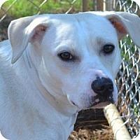 Adopt A Pet :: Sunshine - Athens, GA