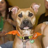 Adopt A Pet :: Tamera - Baton Rouge, LA
