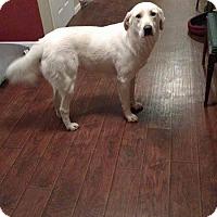 Adopt A Pet :: CC  pending adoption - Manchester, CT