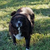 Adopt A Pet :: Maxwell - Kyle, TX
